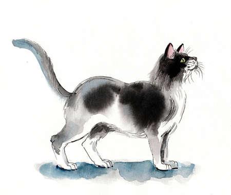 Standing cat. Ink and watercolor drawing Zdjęcie Seryjne - 137766385