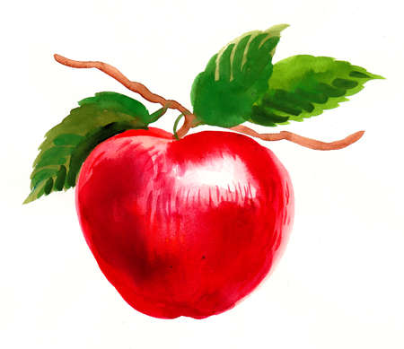 Apple fruit on a tree branch. Watercolor painting