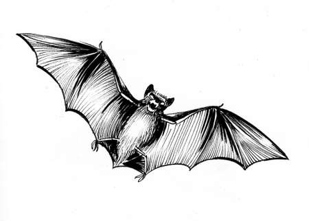 Flying bat. Ink black and white drawing