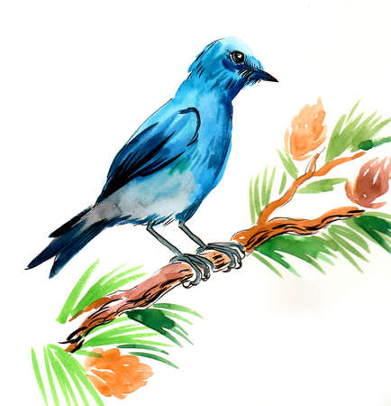 Blue bird on a pine tree. Ink and watercolor illustration Фото со стока