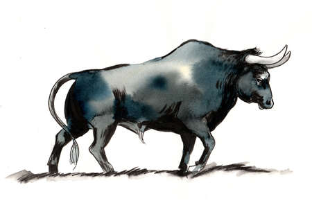 Big black bull. Ink and watercolor illustration
