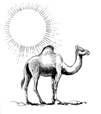 Camel in the desert. In black and white drawing
