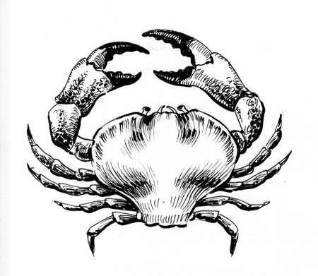 Sea crab. Ink black and white drawing Zdjęcie Seryjne