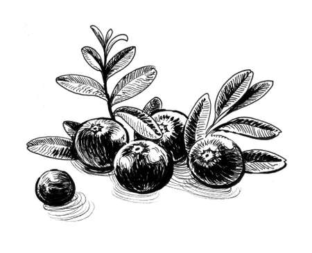 Bunch of cranberries. Ink black and white drawing Фото со стока