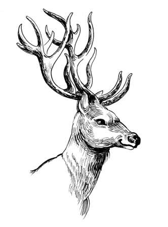 Deer stag head. Ink black and white drawing