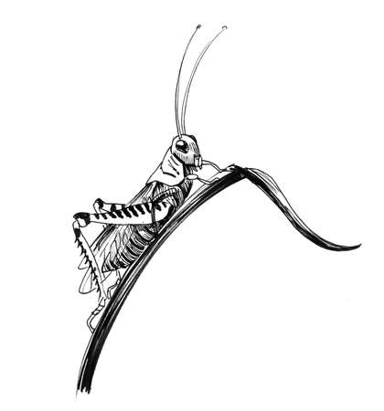 Grasshopper on grass. Ink black and white drawing 写真素材