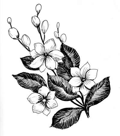 Blossoming tree. Ink black and white drawing