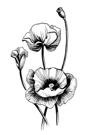 poppy flower. Ink black and white drawing