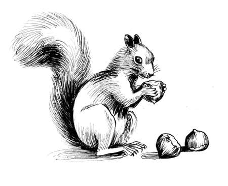 Squirrel eating nuts. Ink black and white drawing