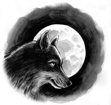 Wolf and moon drawing on white 版權商用圖片