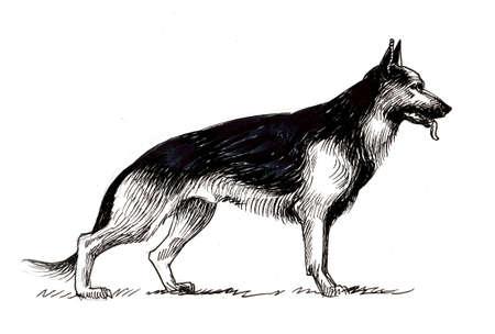 German shepherd dog. Ink black and white drawing