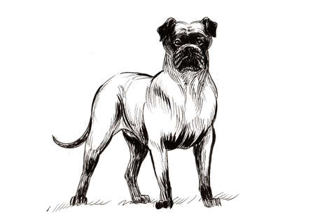 Standing dog. Ink black and white drawing