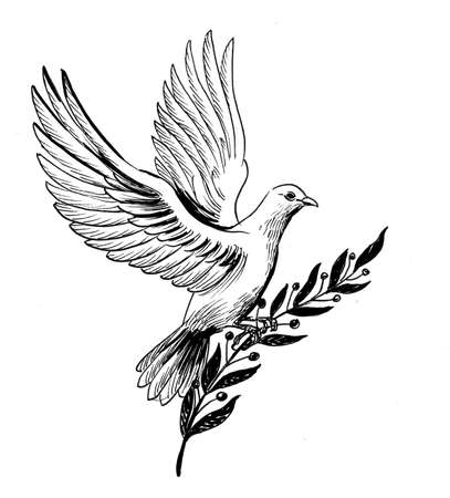 Flying dove with a olive branch 版權商用圖片