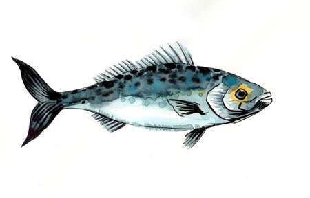 Sea fish. Ink and watercolor illustration 版權商用圖片