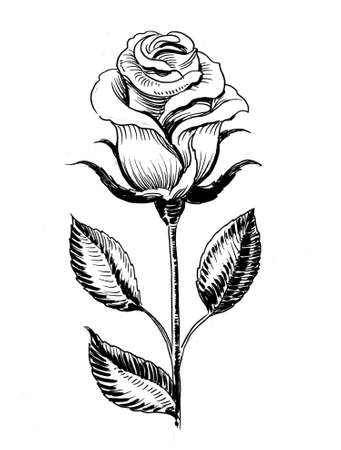 Single rose flower. Ink black and white drawing
