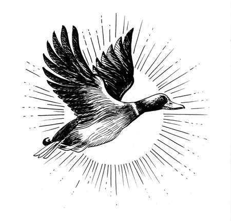 Flying duck bird. Ink black and white