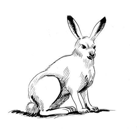 Sitting hare. Ink black and white drawing 版權商用圖片