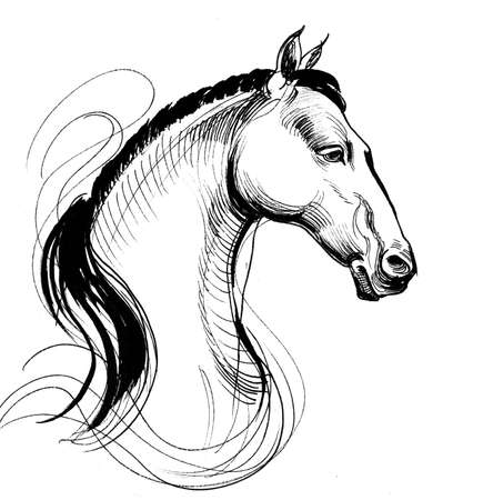 White horse head. Ink black and white drawing