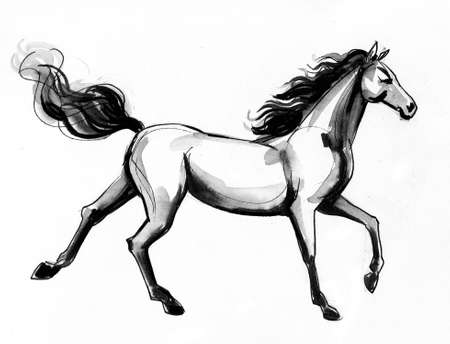 Beautiful horse. Ink and watercolor drawing
