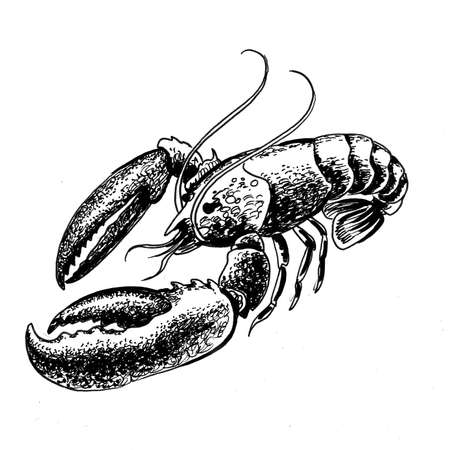 Lobster animal. Ink black and white drawing