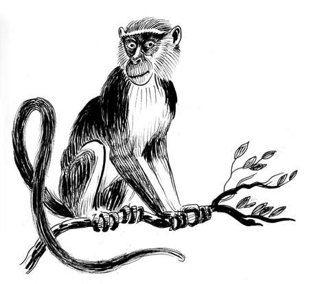 Monkey on a tree. Ink black and white drawing