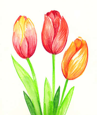 Three tulips. Watercolor painting