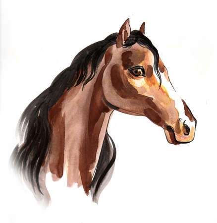 Brown horse head. Ink and watercolor drawing