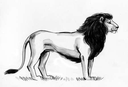Standing African lion. Ink black and white drawing Zdjęcie Seryjne