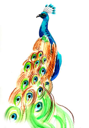Male, peacock, bird. Ink and watercolor illustration