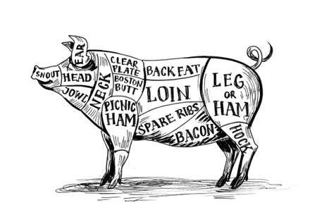 Pig chart. Ink black and white drawing