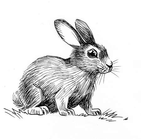 Baby bunny. Ink black and white drawing