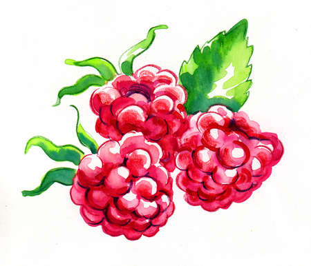 Bunch of raspberries. Watercolor painting