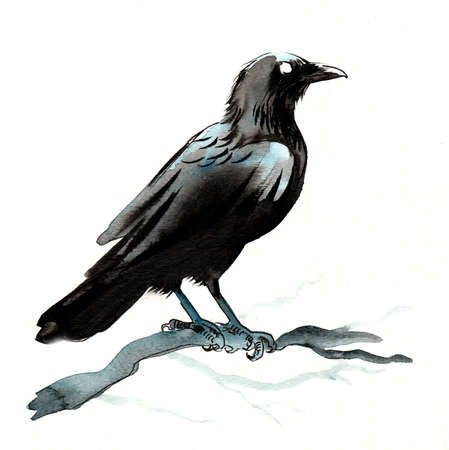 Raven bird on a tree branch. Ink and watercolor illustration