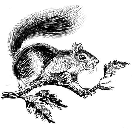 Squirrel on oak tree with acorn Zdjęcie Seryjne