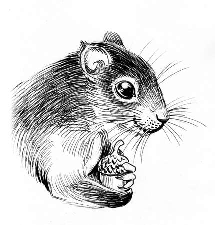 Squirrel with acorn. Ink black and white drawing