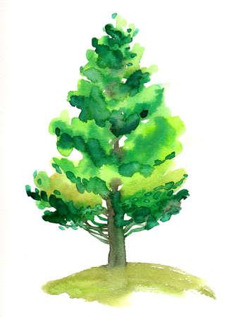 Green pine tree. Watercolor illustration
