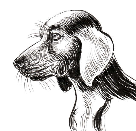 Spaniel dog head. Ink black and white drawing