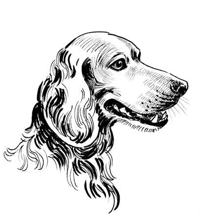 Spaniel dog. Ink black and white drawing Zdjęcie Seryjne