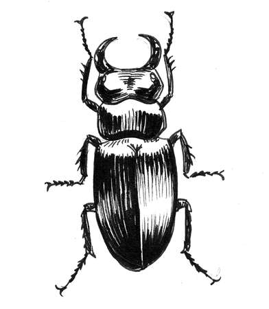 Big beetle insect. Ink black and white drawing
