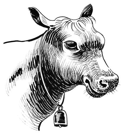 Cow head. Ink black and white drawing
