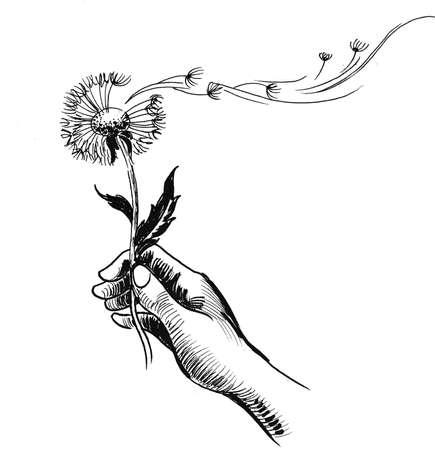 Hand holding dandelion flower. Ink black and white drawing Stock fotó