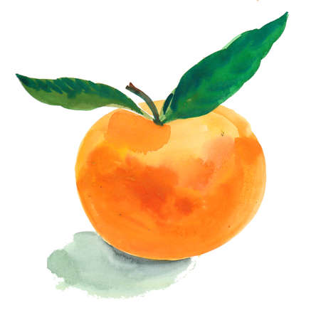 Fresh ripe mandarin fruit. Ink and watercolor illlustration Stock fotó