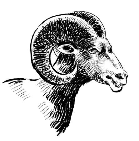 Ram head. Ink black and white drawing