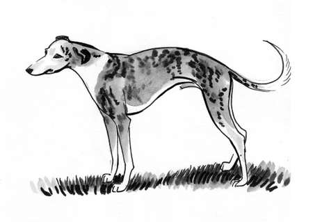 Hound dog. Ink black and whit edrawing Stok Fotoğraf