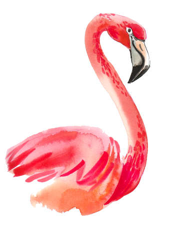 Pink flamingo bird. Watercolor painting