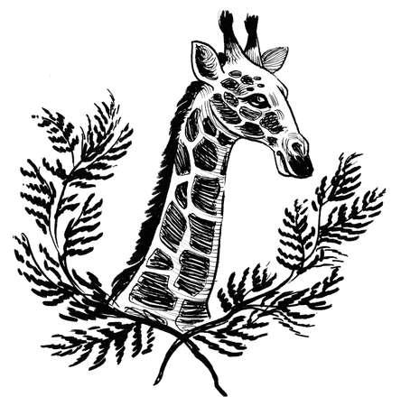 Giraffe animal head. Ink black and white drawing