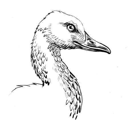 Goose bird head. Ink black and white drawing Stok Fotoğraf