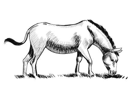 Grazing donkey. Ink black and white drawing Stok Fotoğraf