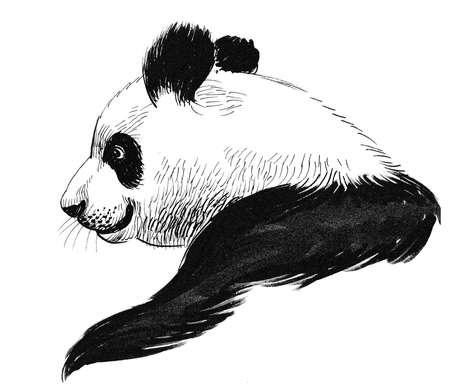 Panda bear. Ink black and white drawing