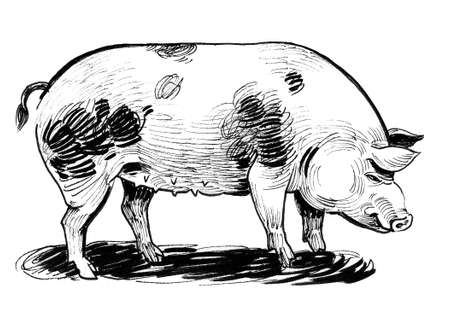 Big fat pig. Ink black and white drawing